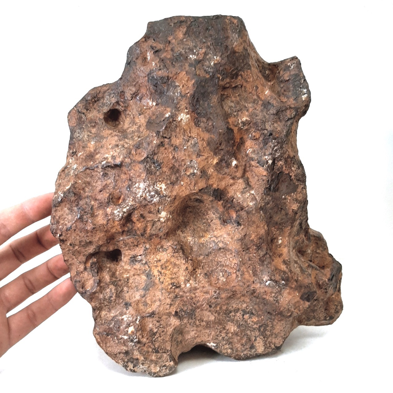 Agoudal meteorite. Museum piece.