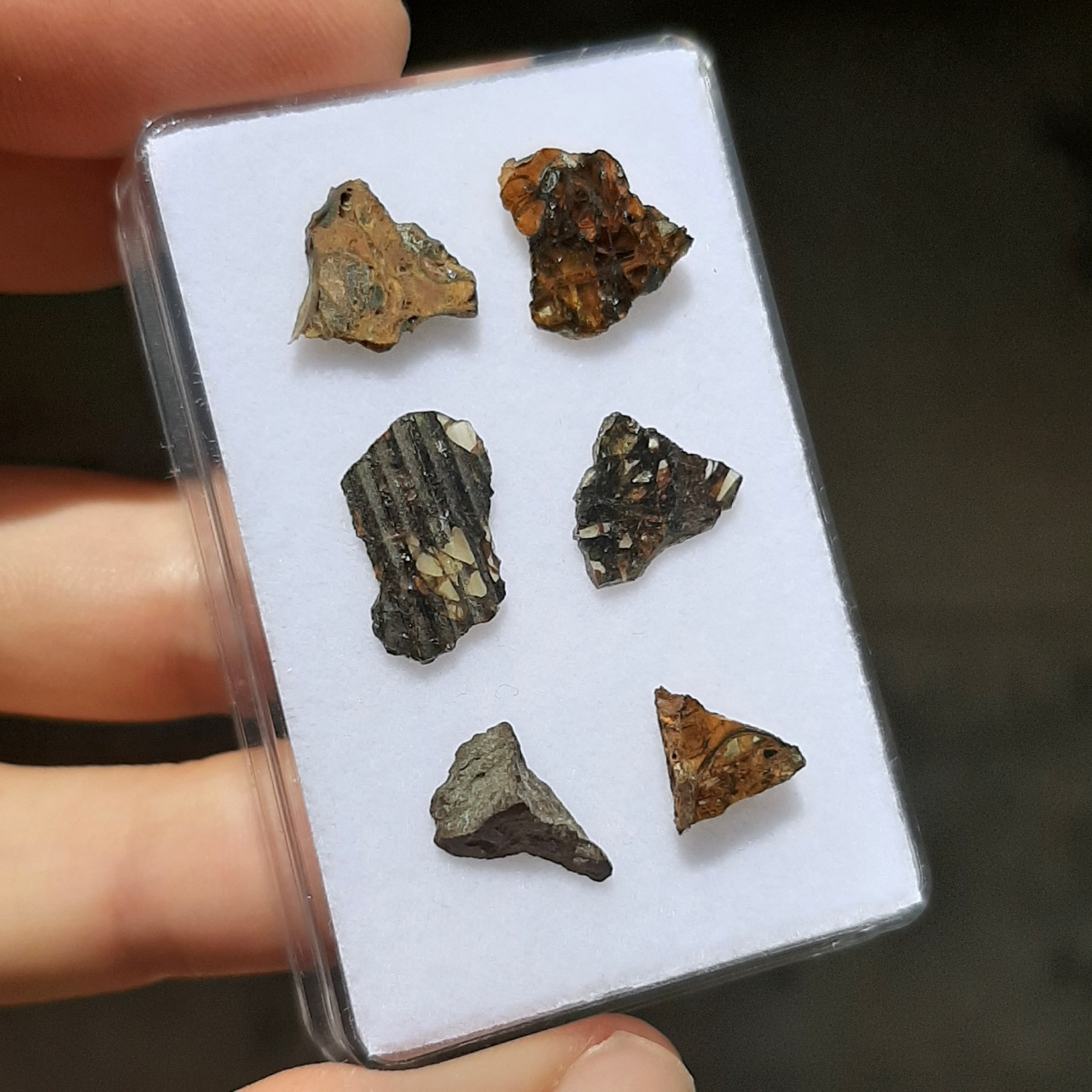 Jepara pallasite meteorite. 6 small slices.