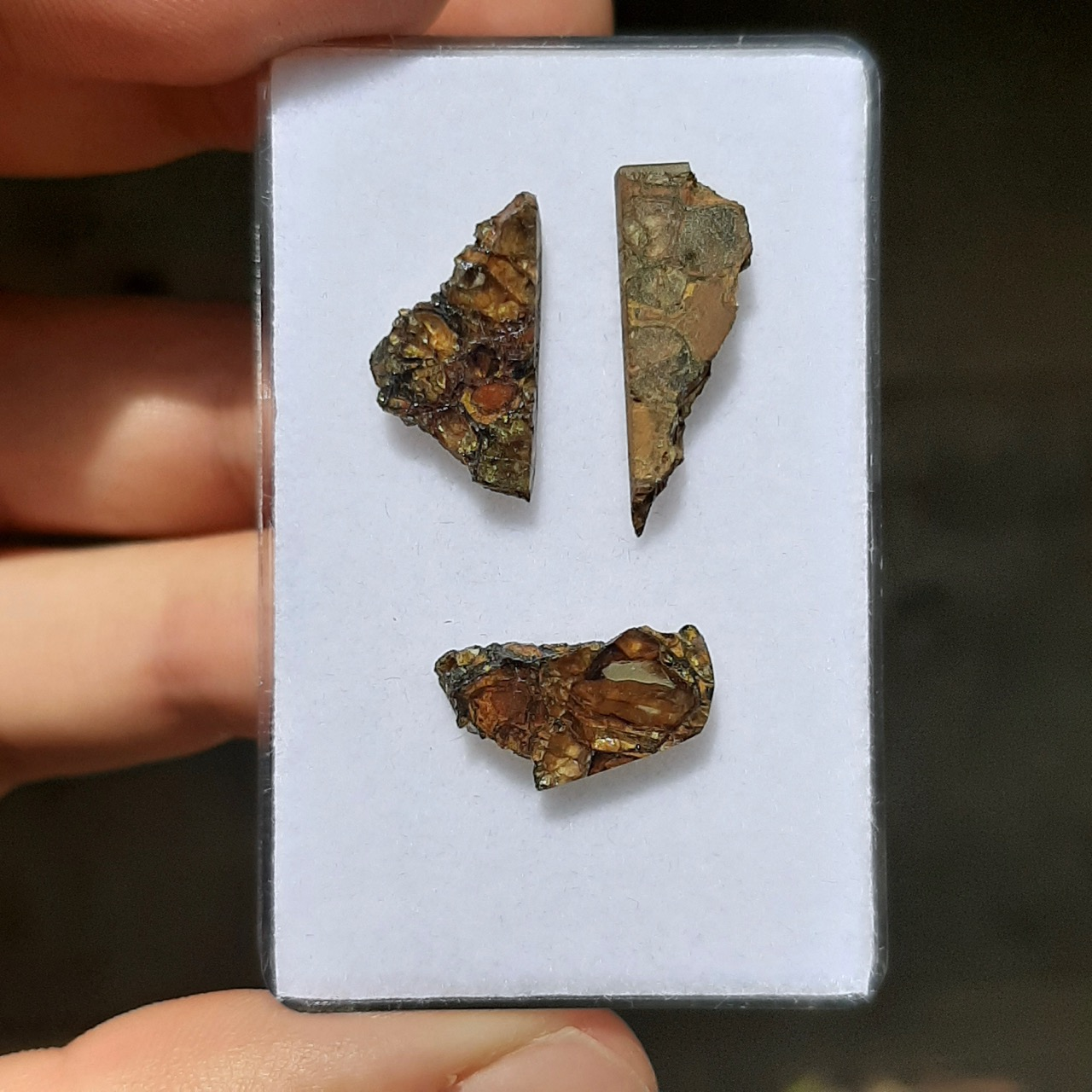 Jepara pallasite meteorite. 3 small slices.