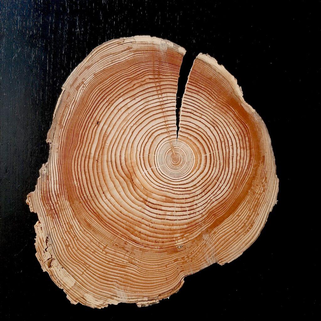 Tunguska wood plate. 30g. Collection